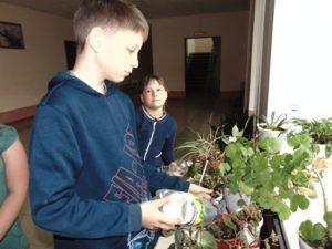 Пересадка комнатных растений (2)