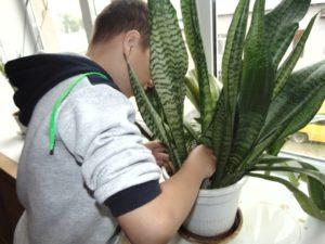 Пересадка комнатных растений (3)