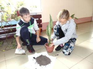 Пересадка комнатных растений (7)