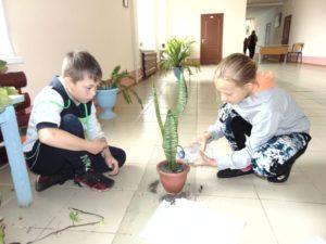 Пересадка комнатных растений (8)